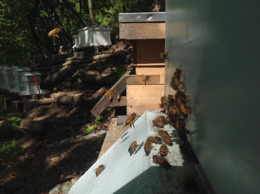 Hillside Hives