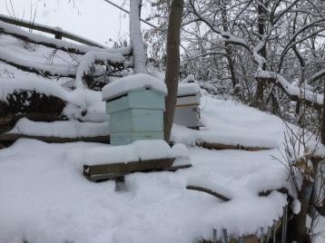 Winter beehives at Hillside Hives